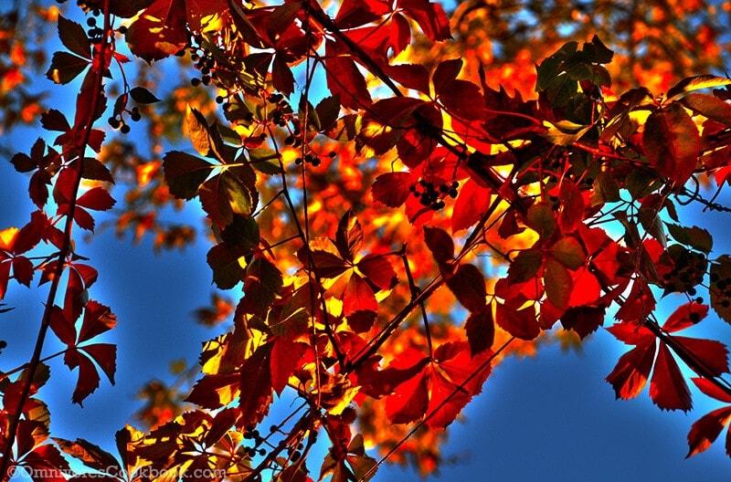 autumn leaves - adventure in Istanbul