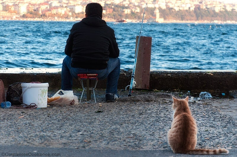 Cat - Turkish adventure