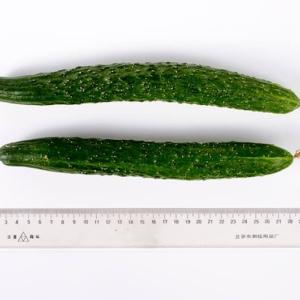 Cucumber | Omnivore's Cookbook