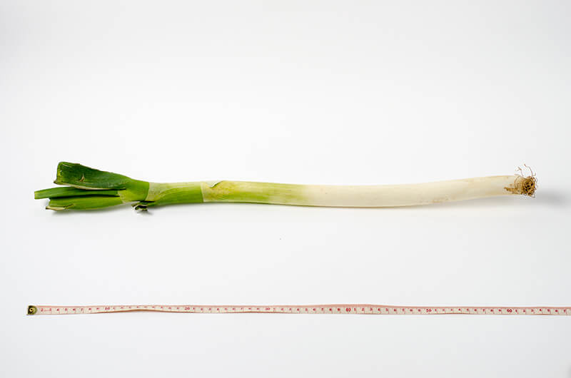 Pantry scallion | Omnivore's Cookbook