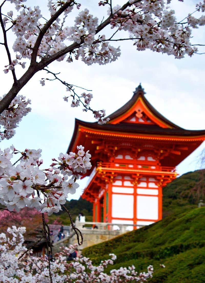 Spring in Japan   Omnivore's Cookbook