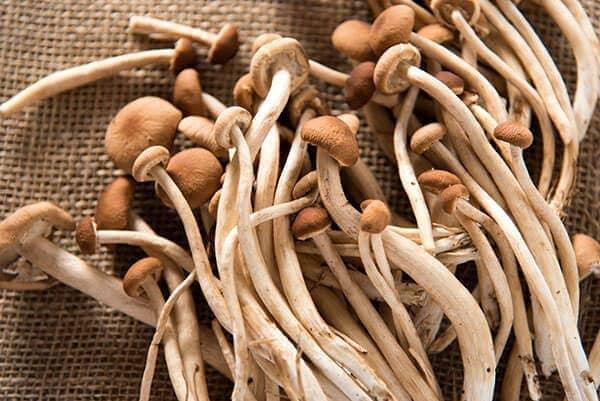 Tea Tree Mushrooms | omnivorescookbook.com
