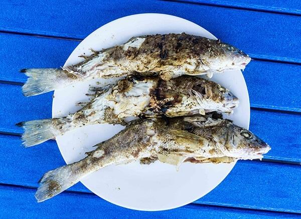 Roasted Fish - Spring Break 2015 in Florida   omnivorescookbok.com