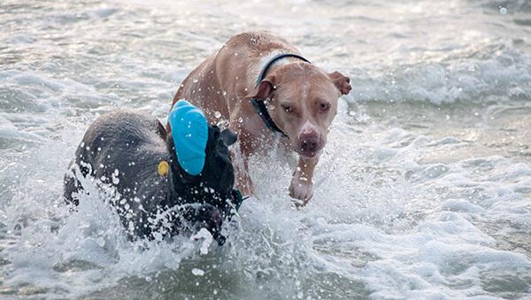 Dogs - Spring Break 2015 in Florida | omnivorescookbok.com