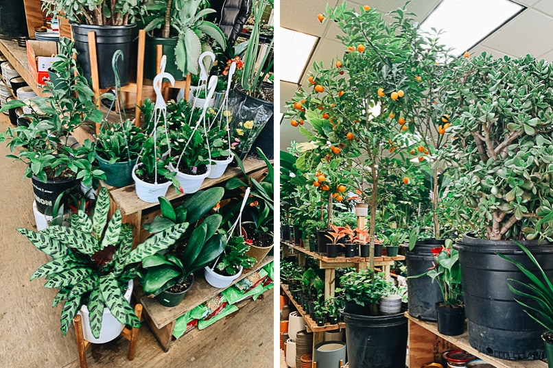 Manhattan Chinatown - Dahing Plants shop